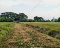 ขายที่ดิน  2-2-70 ไร่ ติดถนนใหญ่ อินทร์บุรี