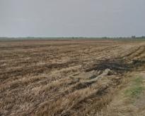 ที่ดิน126ไร่ อยู่ในเขตอำเภอโพธิ์ทอง จ.อ่างทอง