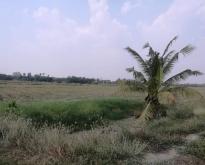 ขายที่ดิน 10 ไร่ 44 ตารางวา หลังค่ายพม่า