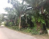 ขายที่ดินแปลงสวย 2-3-61 ไร่ ติดถนนอยู่ในแหล่งชุมชน