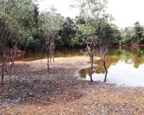 ขายที่ดินบ่อน้ำ10 ไร่ บางม่วง ตะกั่วป่า พังงา