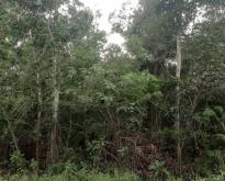 ขายที่ดินเปล่า 49 ตารางวา ป่าติ้ว ยโสธร