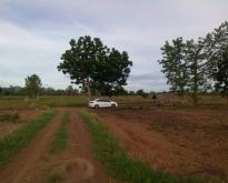 ที่ดินทำการเกษตรชนแดน เพชรบูรณ์
