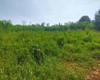 ขายที่ดินเหมาะทำการเกษตร จ.เพชรบูรณ์ 174 ไร่