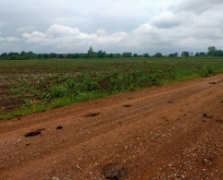 ที่ดินทำการเกษตรใกล้หมู่บ้านศรีเทพ