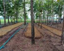 ที่ดินปลูกต้นไม้ยืนต้นแล้วปรับพื้นที่แล้วเพชรบูรณ์