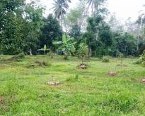 ขายที่ดินสวนผลไม้ ผลไม้เต็มพื้นที่ จ.นครศรีธรรมราช
