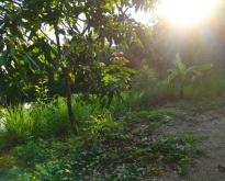 ที่ดินทำเลทอง อยู่ติดถนนเส้นรอบเมืองหนองบัวลำภู