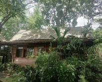 ขายโฮมสเตย์บ้านไม้เรือนไทยสไตล์ล้านนา