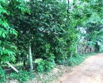 ขายที่ดินสวนผสม โป่งน้ำร้อน จันทบุรี 4-2-0 ไร่