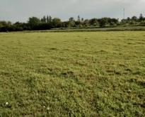 ขายที่ดิน จังหวัดราชบุรี ราคาถูก 17 ไร่ 24 ตารางวา