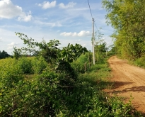 ขายที่ดินสวนยูคาลิปตัส 20-2-89 ไร่ จ.มหาสารคาม