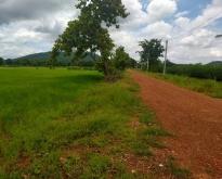 ที่ดินทำการเกษตรวิเชียรบุรี